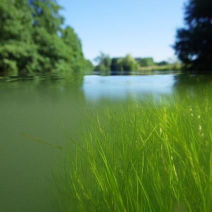 continuité écologique